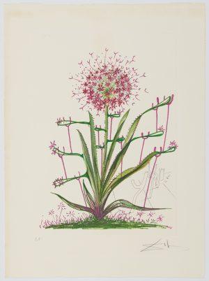 Salvador Dalí. Surrealistic Flowers or Florals, 1972, 1 complete